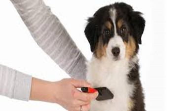 Tips on How to Brush Dogs